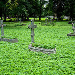 Полемика о Wi-Fi на кладбищах добралась до Мосгордумы