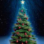 16 декабря состоится торжественная рубка главной елки России