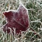 В Московской области из-за ночных заморозков объявлен «красный» уровень опасности