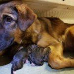 Удивительное рядом: Собака «стала мамой» прямо в вагоне метро у «Павелецкой»