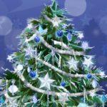 Главную новогоднюю елку страны срубили в Подмосковье доставят в Кремль автопоездом