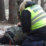 Операция «Елочка»: в подмосковных лесах ели взяты под усиленный контроль