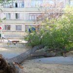 Трагедия на Щелковском шоссе: упавшим деревом насмерть придавило женщину