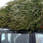 Новогодний «дурдом на колесах»: автомойщики из Строгино угнали машину, чтобы украсть елки