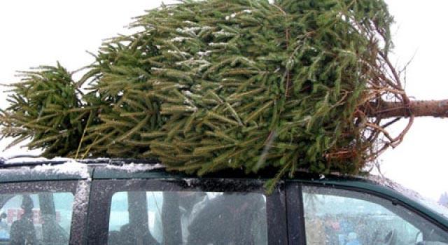 30 декабря два работника автомойки в Строгино угнали машину, чтобы украсть новогодние елки