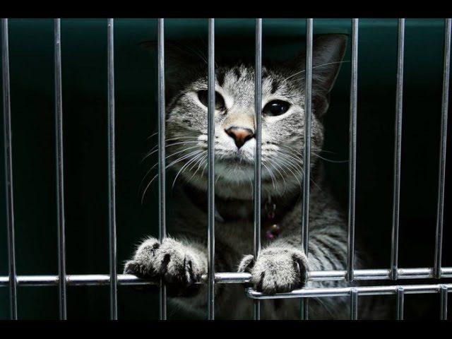 Десятки кошек оказались заживо замурованными на Волгоградлке
