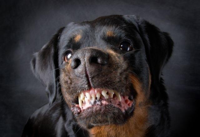 2 февраля в Басманном районе ЦАО собаки насмерть загрызли женщину