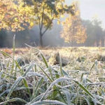 Аномальное тепло в Москве сменят первые заморозки