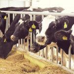 «Агростартап»: начинающие фермеры Подмосковья в ожидании грантов