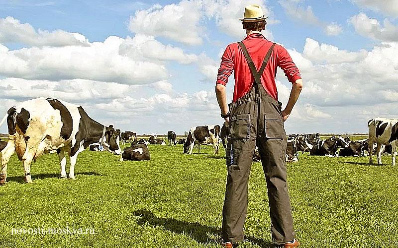 фермерское хозяйство Подмосковье