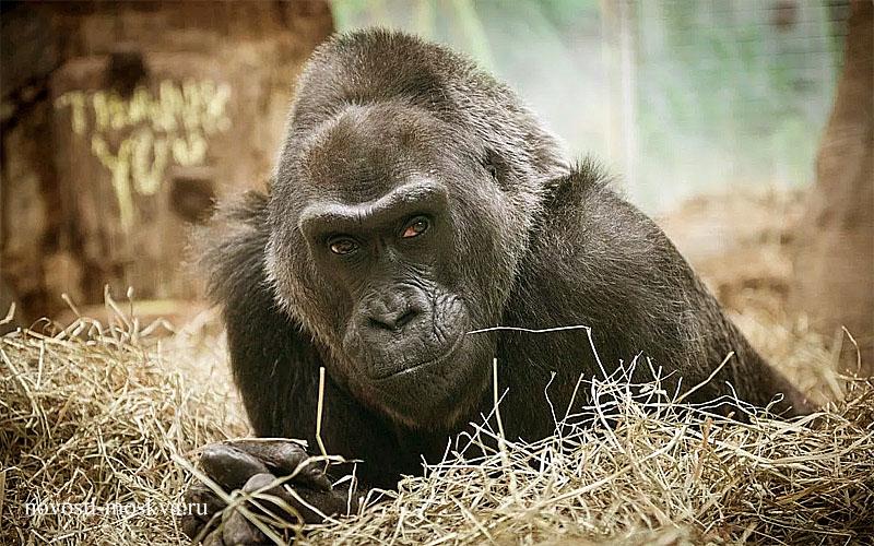 в Мособласти опять открывают зоопарки