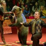 Нападение медведя в «Реутов-парке»: последние новости